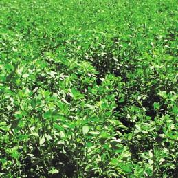 Alfalfa Andina 6 25 Kg,...