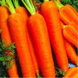 Zanahoria Chantenay Red...